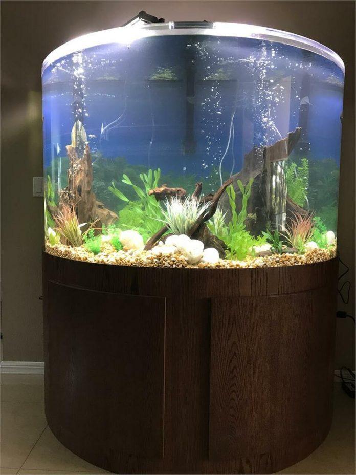 Live Aquarium Plants Online